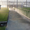 Azienda Agricola Casal Bio Plant peperoni