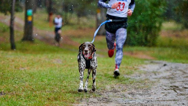 Canicross: correre con il tuo cane fa bene anche a te