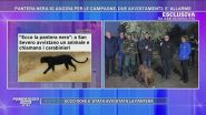 Allarme pantera nera a San Severo - Testimonianze esclusive
