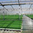 Azienda Agricola Casal Bio Plant orticoltura