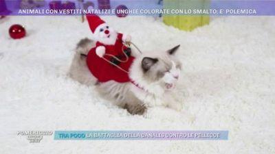 Animali con vestiti natalizi e unghie colorate