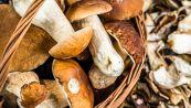 Non mettere mai i funghi in buste di plastica: il motivo