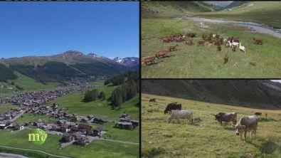 Feel the Alps