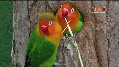 La tutela dei pappagalli