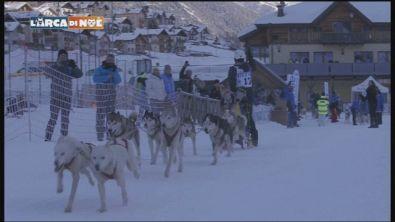 Cani da slitta in Trentino