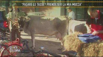 La mucca Onesta