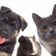 Cane gatto e coniglio