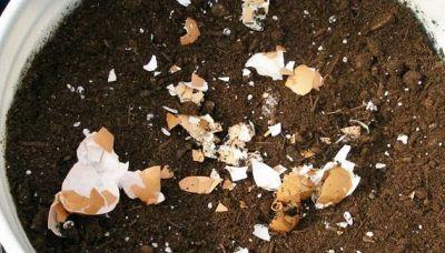 Fertilizzante naturale: mettete gusci d'uovo e fondi di caffè nei vasi