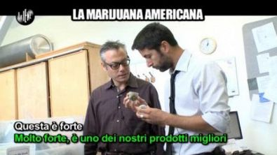 TRINCIA: La marijuana americana