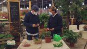 I segreti del giardinaggio