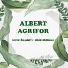 Albert Agrifor