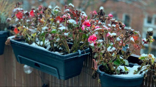 Le piante ideali da tenere in balcone con il freddo