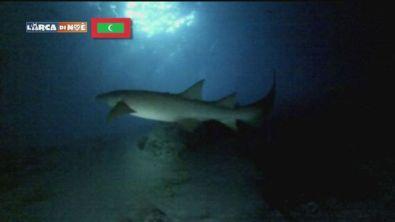 Relax tra gli squali