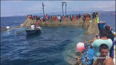 La battaglia del tonno