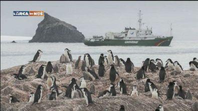 Pinguini in declino