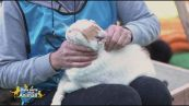 Il gatto Cesare cerca una famiglia