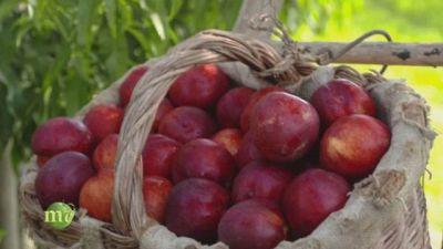 Nel cuore della frutta