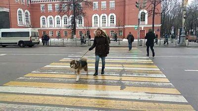 Questo cane ha uno modo stranissimo di attraversare le strisce pedonali
