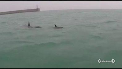 Genova, arrivano le orche