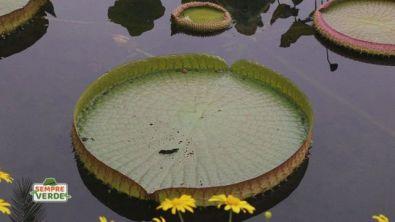 Conosciamo le piante acquatiche