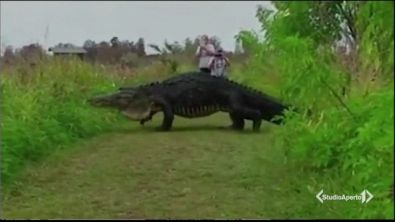 Florida, avvistato un gigantesco alligatore