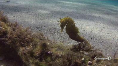 La strage dei cavallucci marini