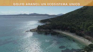 L'ecosistema di Golfi Aranci
