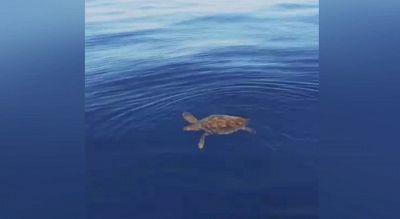 Capo Carbonara: avvistati due esemplari di Caretta caretta