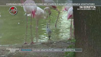 Coronavirus: la situazione nel parco faunistico senza visitatori