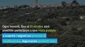 Riassaporare la Toscana con la magica festa della vendemmia