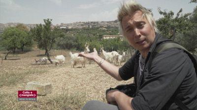 Andrea Mainardi e le capre girgentane