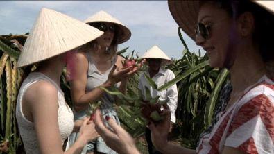 Vietnam Dragon Fruit