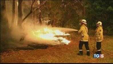 Gli incendi dell'uomo fanno strage di koala