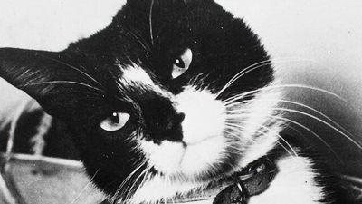 Oscar, la storia del gatto inaffondabile