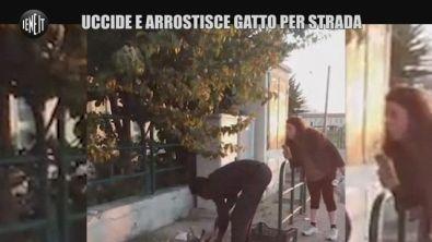 Choc a Livorno, uccide e arrostisce un gatto per strada: denunciato