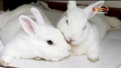 La collina dei conigli contro le gabbie