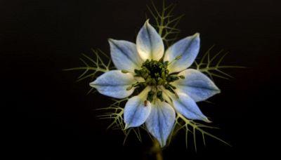 C'è un concorso fotografico dedicato ai fiori dell'Appennino