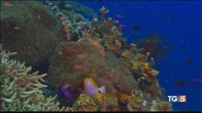 La barriera corallina a rischio scomparsa