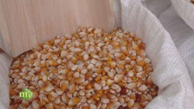 Dal chicco di mais alla farina