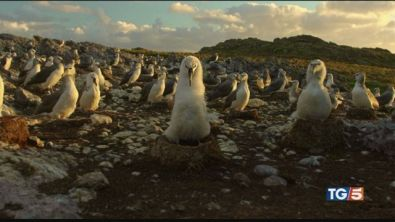 L'isola degli albatross, meraviglie da salvare
