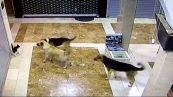Mamma gatta accorre per salvare il micino dai cani randagi