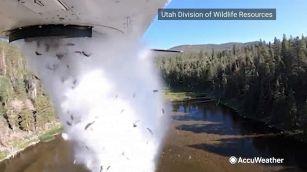 Piovono pesci, la strana tecnica per ripopolare i laghi