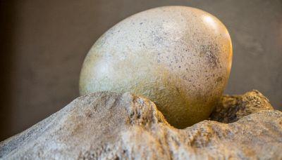 Uovo di dinosauro, la scoperta straordinaria in dogana