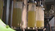Come nasce il limoncello?
