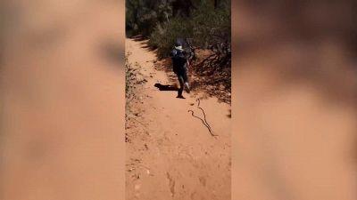 Il terribile scherzo del serpente
