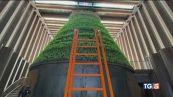 Milano, la fattoria verticale più grande d'Europa