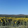 Agriturismo Le Giunchiglie - Azienda bioagrituristica Girasoli in Maremma