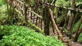 Puzzlewood, ecco il bosco che ha ispirato Il Signore degli Anelli