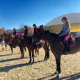 scuderia del sole corsi di equitazione