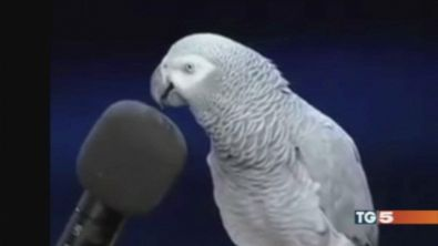Einstein, un pappagallo davvero speciale